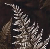 Heathers Feathers