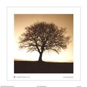 Winter Tree No. 2