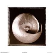 Shell-Egance I