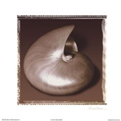 Shell-Egance II