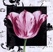 Damask Tulip I