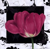 Damask Tulip II