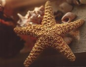 Starfish I