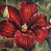 Rosa Odorada