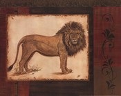 Savanna Lion