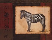 Savanna Zebra