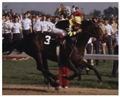 Seattle Slew 1977 Kentucky Derby #410