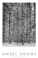 Pine Forest in Snow (embossed)