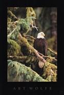 Silent Sentinel, Alaska