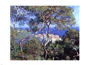 Bordighera, Trees