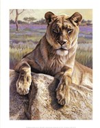 Kalon Baughan - Serengeti Lioness Size 14x11