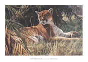 Last Sanctuary- Florida Panther (detail)