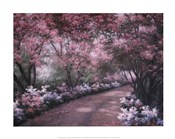 Azalea Walk