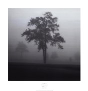 Fog Tree Study I