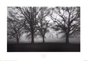 Fog Tree Study IV