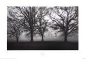 Fog Tree Study IV