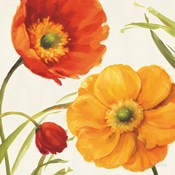 Poppies Melody II