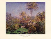 Small Country Farm at Bordighera