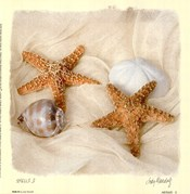 Shells III