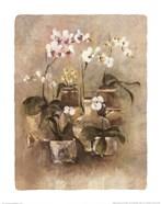 Arrangement of Orchids II-11x14
