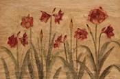 Row of Red Amaryllis