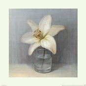 Single White Lily