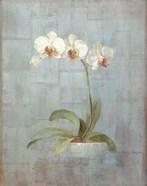 Elegant Orchids II