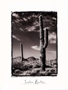 Saguaro Organ Pipe
