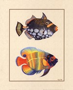 Tropical Fish II