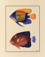 Tropical Fish III
