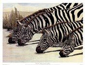 Four Zebras Drinking