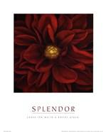Splendor - Red Pool