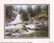 Bucks Near Waterfall
