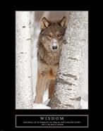 Wisdom - Gray Wolf