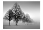 Winter Trees III