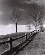 Fences And Trees, Empire, Michigan