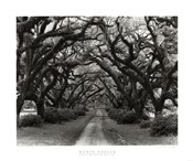 Path In The Oaks #2, Louisiana