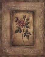 Grand Savin Rose