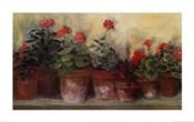Kathleen's Geraniums
