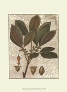 Leaves III