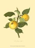 Grange Apple