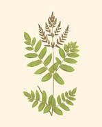 Woodland Ferns VII