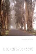 Eucalyptus In The Fog