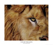 Eye of the Lion