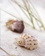 Sandy Beach IV