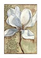 Magnolia Majesty I