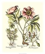 Framboise Floral II