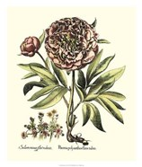 Framboise Floral III