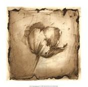 Floral Impression IV