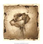 Floral Impression VI